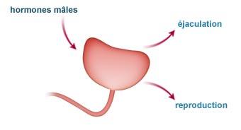 Explications physiologiques