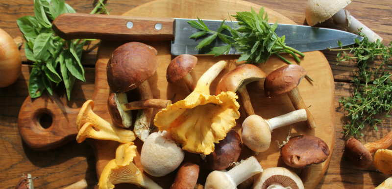champignons-cancer-prostate